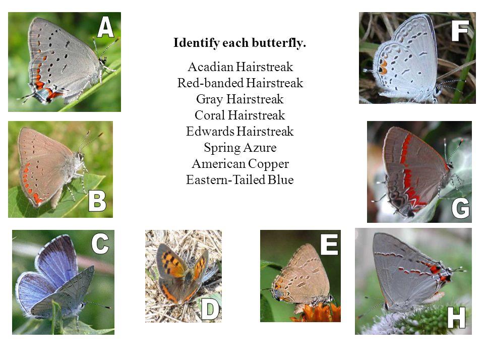 Identify each butterfly.