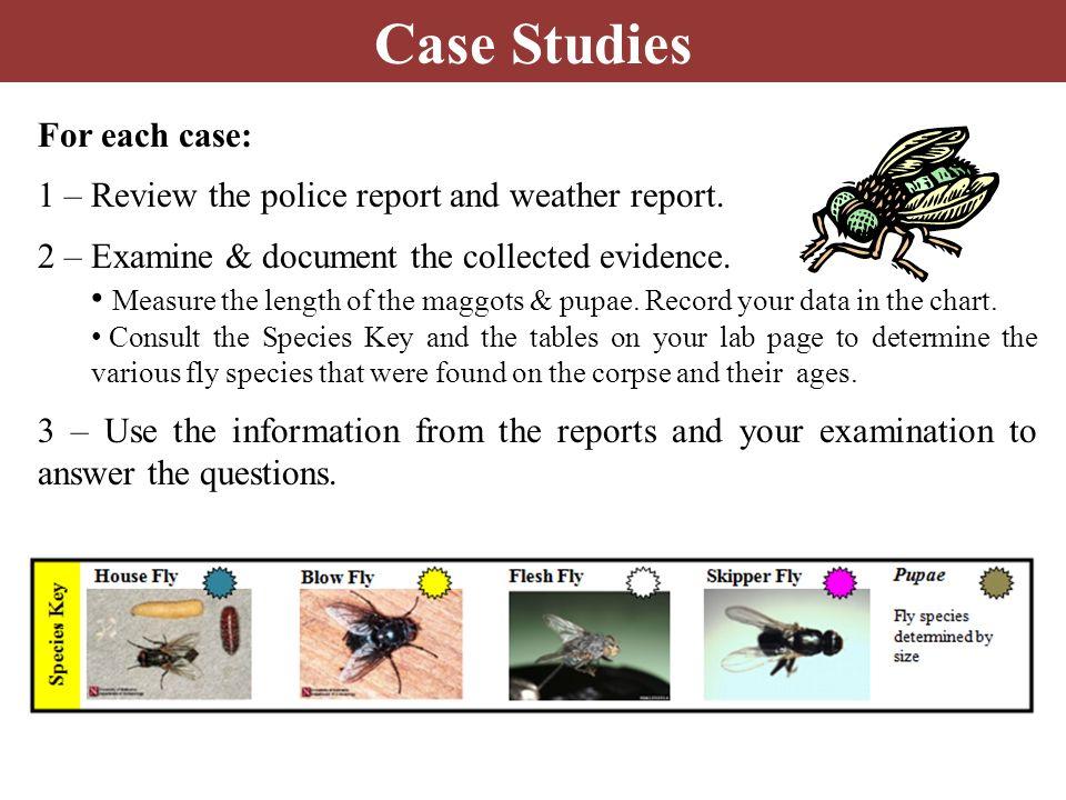 Case #1: Oh, Deer.