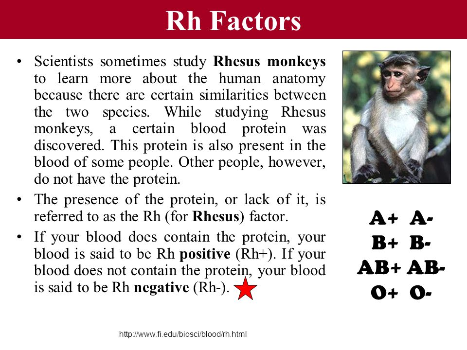 Rh Factors Scientists sometimes study Rhesus monkeys to learn more about the human anatomy because there are certain similarities between the two spec