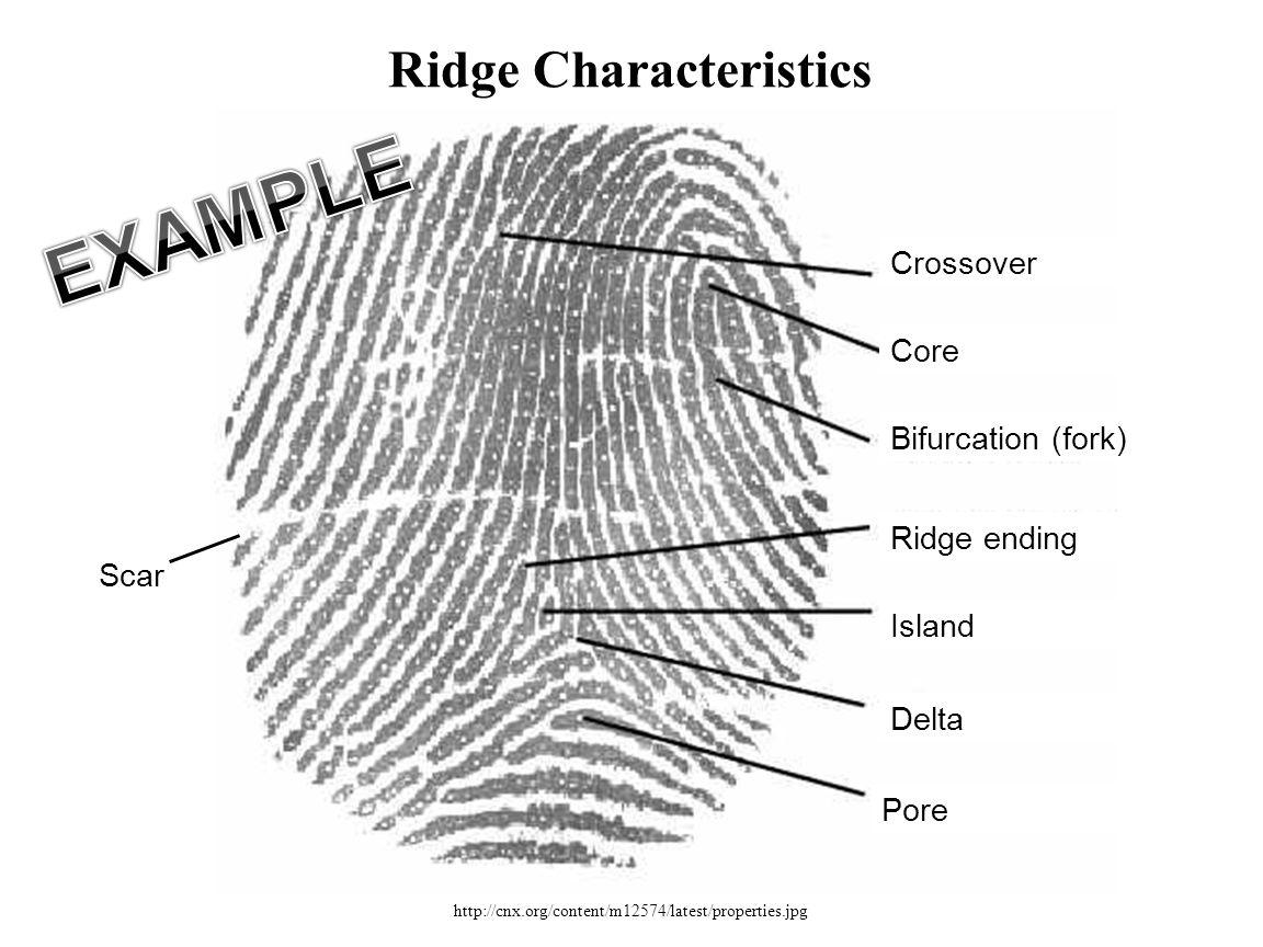 http://cnx.org/content/m12574/latest/properties.jpg Ridge Characteristics Crossover Core Bifurcation (fork) Ridge ending Island Delta Pore Scar