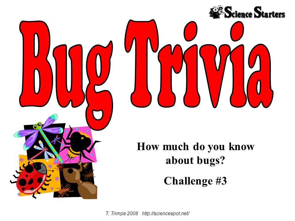 How much do you know about bugs Challenge #3 T. Trimpe 2008 http://sciencespot.net/