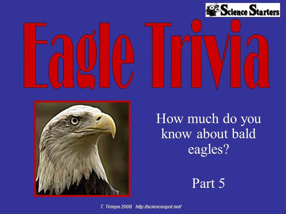 How much do you know about bald eagles? Part 5 T. Trimpe 2008 http://sciencespot.net/