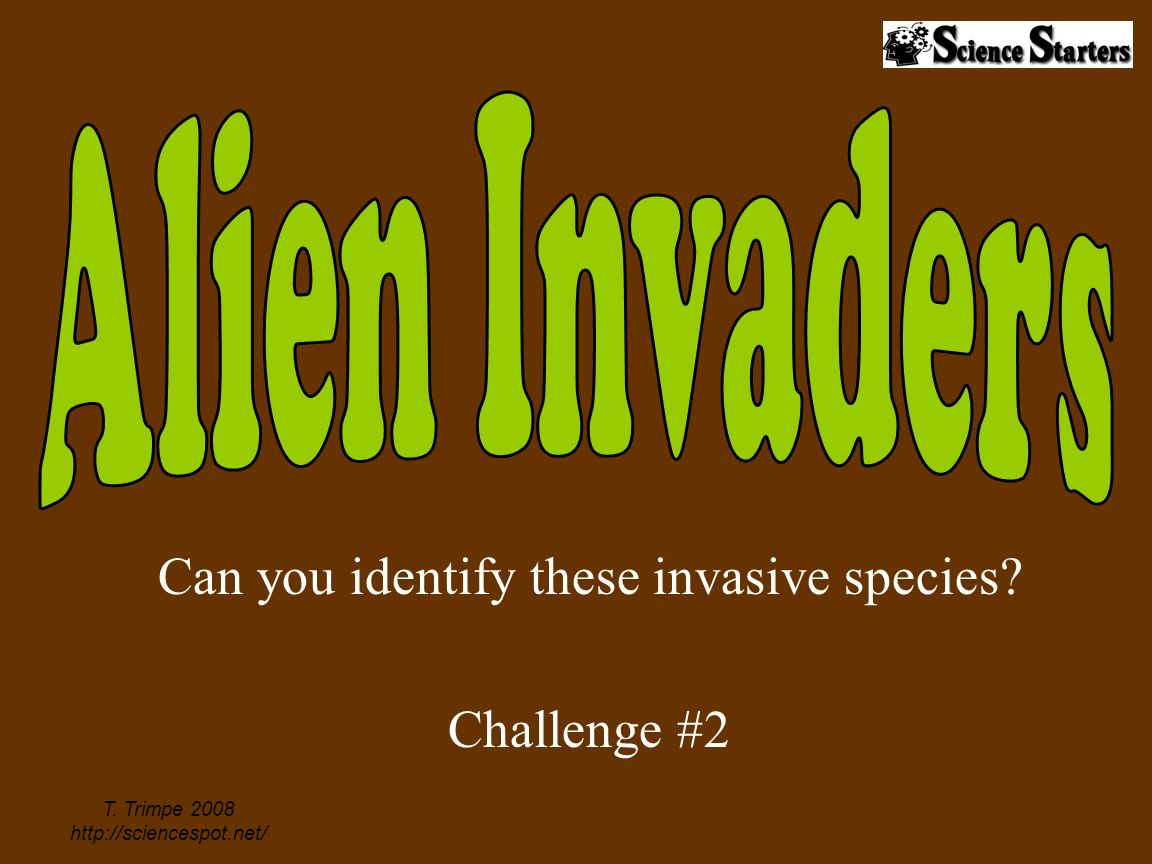 Can you identify these invasive species Challenge #2 T. Trimpe 2008 http://sciencespot.net/
