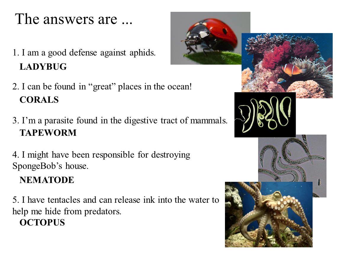 Image Credits Ladybug - http://www.kidzcraftz.ca/pics/Ladybug6.jpghttp://www.kidzcraftz.ca/pics/Ladybug6.jpg Coral - http://www.chbr.noaa.gov/categories/raim/images/coral_01.jpghttp://www.chbr.noaa.gov/categories/raim/images/coral_01.jpg Tapeworm – http://www.cheamviewvet.com/images/Tapeworm.jpghttp://www.cheamviewvet.com/images/Tapeworm.jpg Nematode - http://w3.rennes.inra.fr/umrbio3pE/equipes/nematodes/images/lamelle-460.jpg http://w3.rennes.inra.fr/umrbio3pE/equipes/nematodes/images/lamelle-460.jpg Octopus – http://upload.wikimedia.org/wikipedia/commons/thumb/2/23/Moving_Octopus_Vulg aris_2005-01-14.ogg/mid-Moving_Octopus_Vulgaris_2005-01-14.ogg.jpg http://upload.wikimedia.org/wikipedia/commons/thumb/2/23/Moving_Octopus_Vulg aris_2005-01-14.ogg/mid-Moving_Octopus_Vulgaris_2005-01-14.ogg.jpg