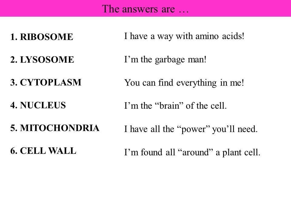The answers are … 1. RIBOSOME 2. LYSOSOME 6. CELL WALL 3. CYTOPLASM 4. NUCLEUS 5. MITOCHONDRIA I have a way with amino acids! Im the garbage man! You