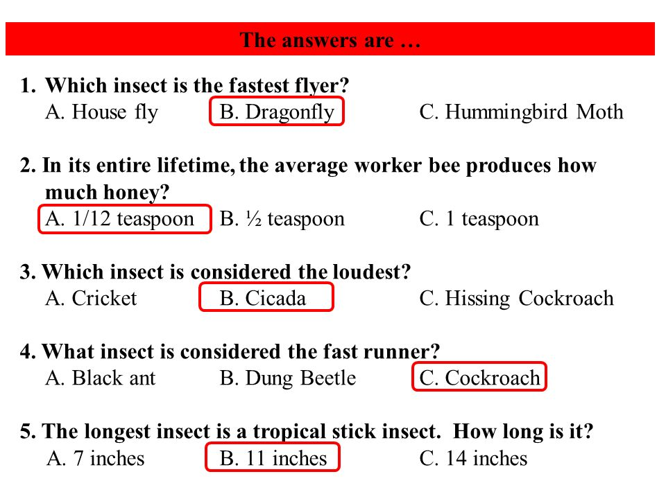 The answers are … 1.Which insect is the fastest flyer.