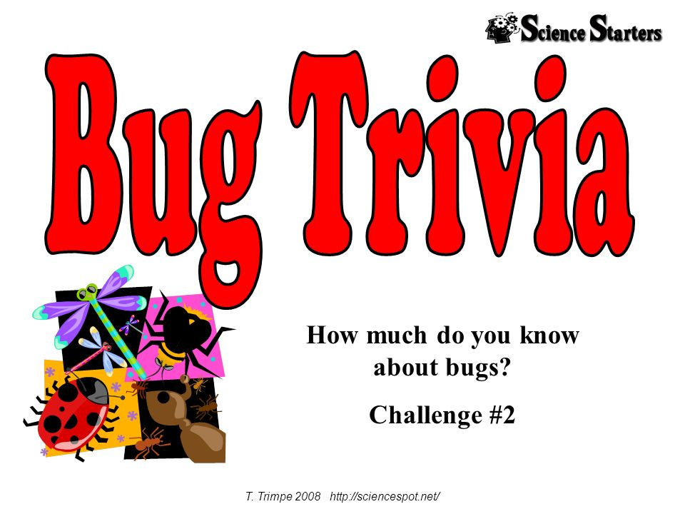 How much do you know about bugs Challenge #2 T. Trimpe