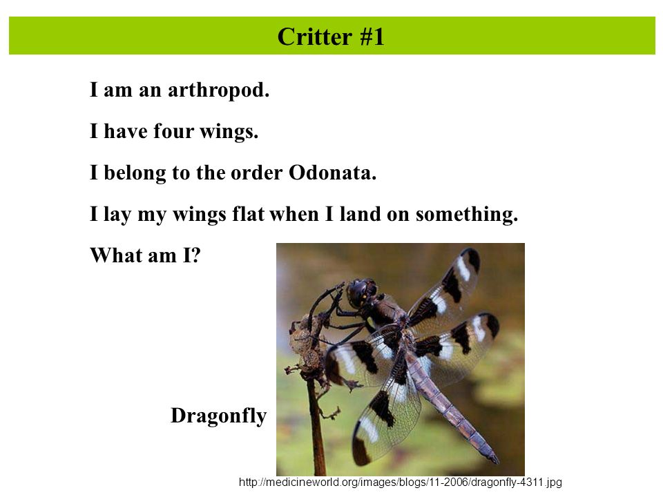 Critter #1 I am an arthropod. I have four wings. I belong to the order Odonata.