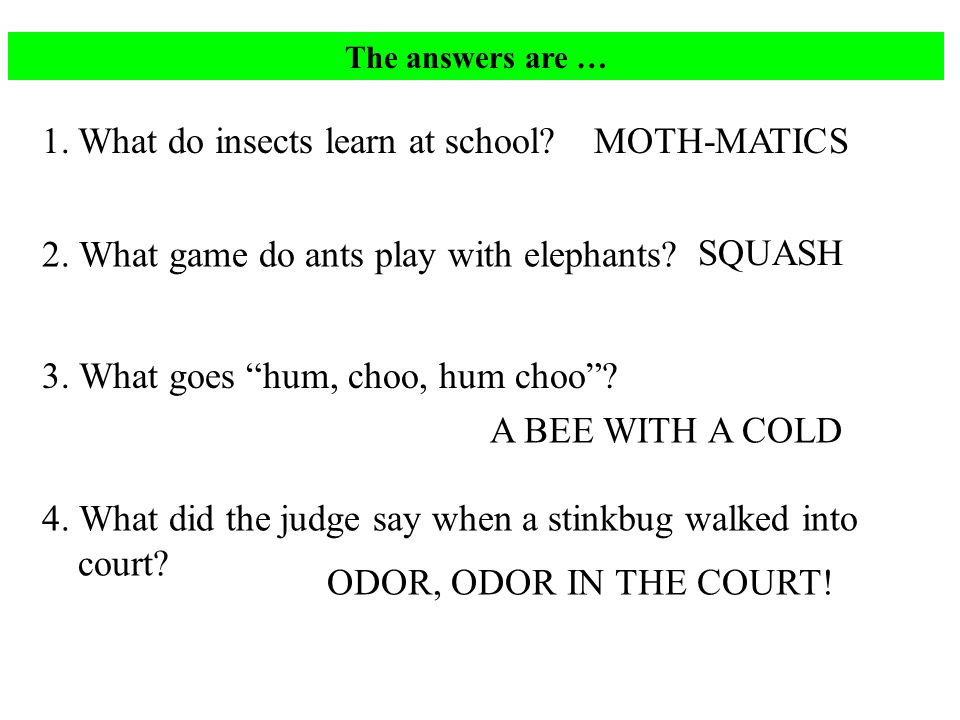 The answers are … 1.What do insects learn at school.