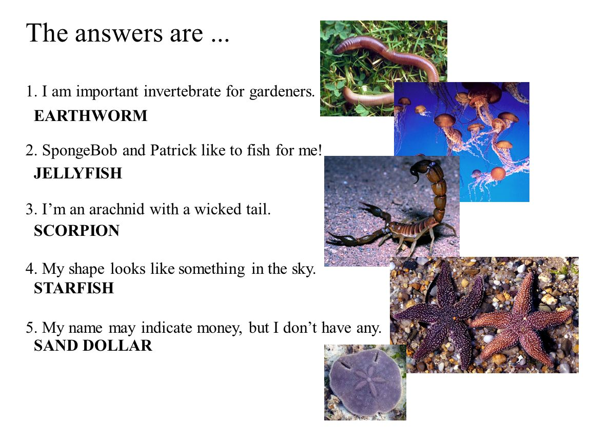 The answers are...1. I am important invertebrate for gardeners.