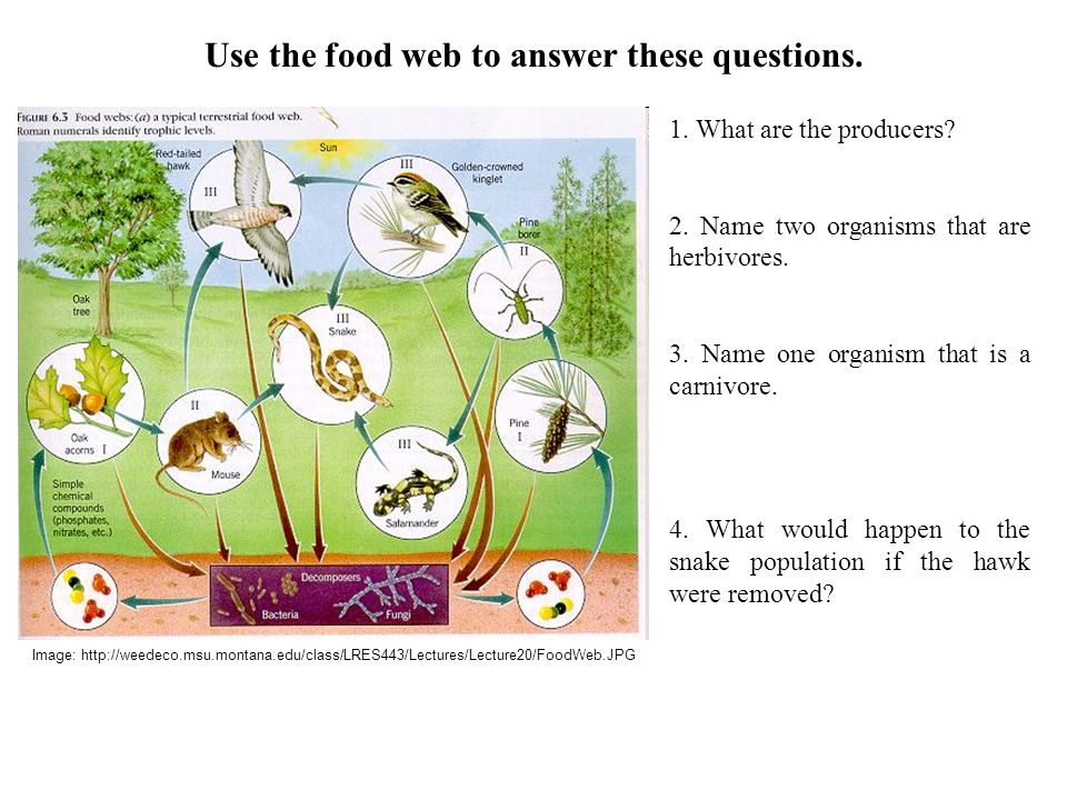 1.What are the producers. 2. Name two organisms that are herbivores.