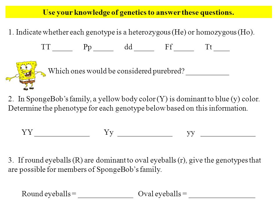 Use your knowledge of genetics to answer these questions. 1. Indicate whether each genotype is a heterozygous (He) or homozygous (Ho). TT _____ Pp ___