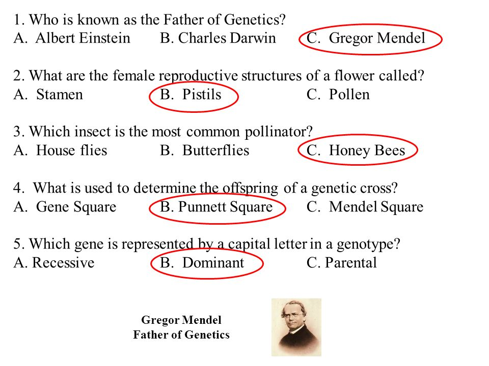 1. Who is known as the Father of Genetics. A. Albert EinsteinB.