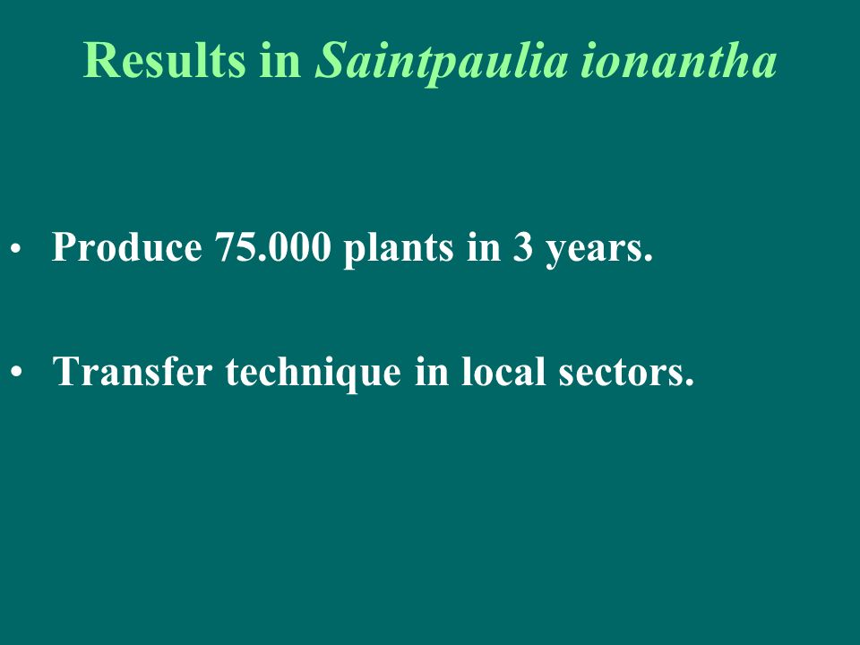 Results in Saintpaulia ionantha Produce 75.000 plants in 3 years. Transfer technique in local sectors.