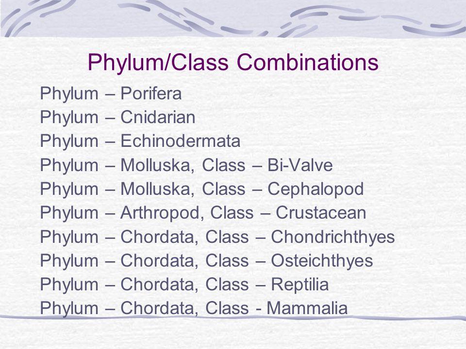 Phylum/Class Combinations Phylum – Porifera Phylum – Cnidarian Phylum – Echinodermata Phylum – Molluska, Class – Bi-Valve Phylum – Molluska, Class – C