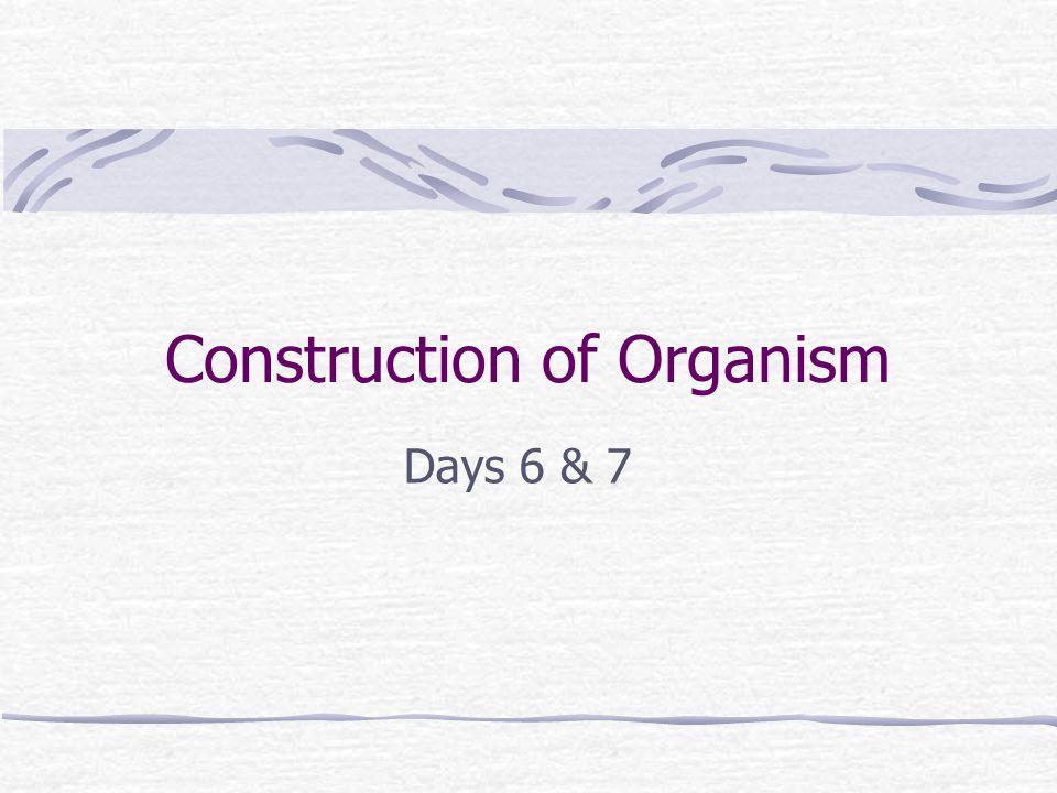 Construction of Organism Days 6 & 7