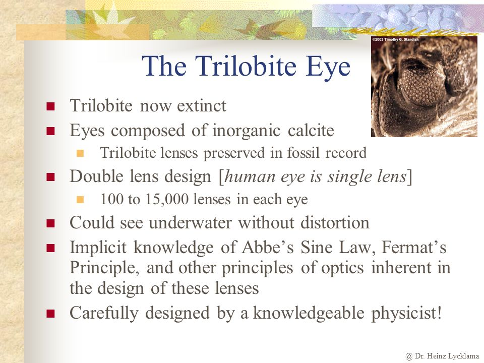 @ Dr. Heinz Lycklama The Trilobite Eye Trilobite now extinct Eyes composed of inorganic calcite Trilobite lenses preserved in fossil record Double len