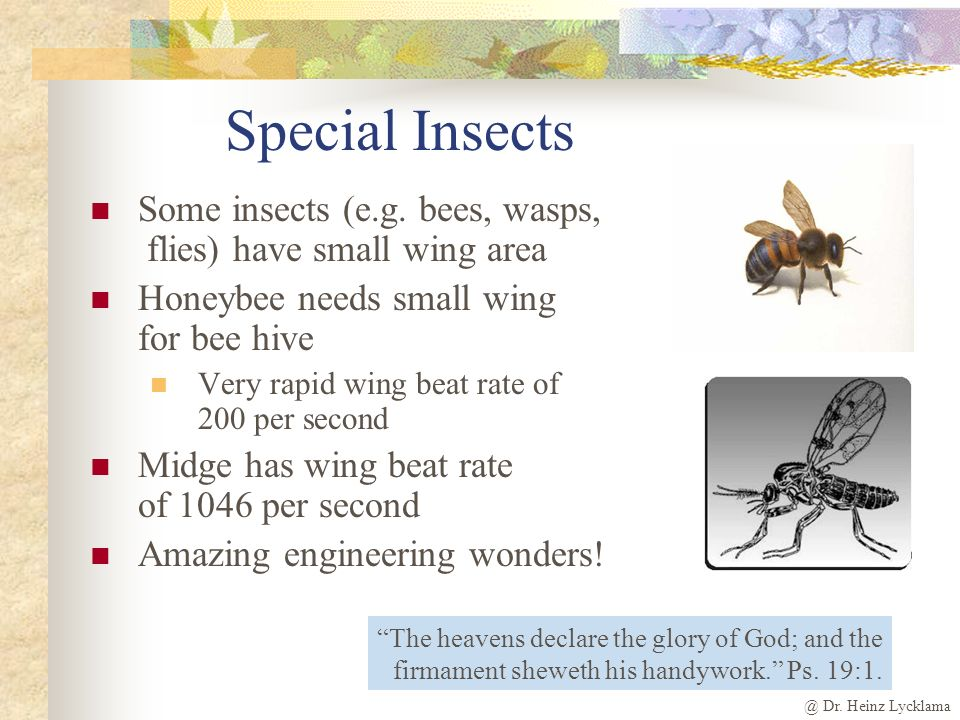 @ Dr.Heinz Lycklama Special Insects Some insects (e.g.