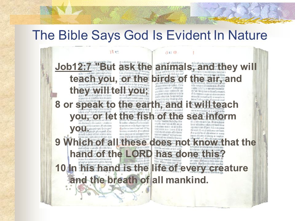 The Bible Says God Is Evident In Nature Job12:7