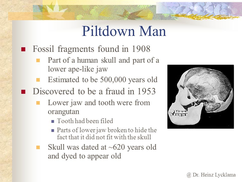 @ Dr. Heinz Lycklama Piltdown Man Fossil fragments found in 1908 Part of a human skull and part of a lower ape-like jaw Estimated to be 500,000 years