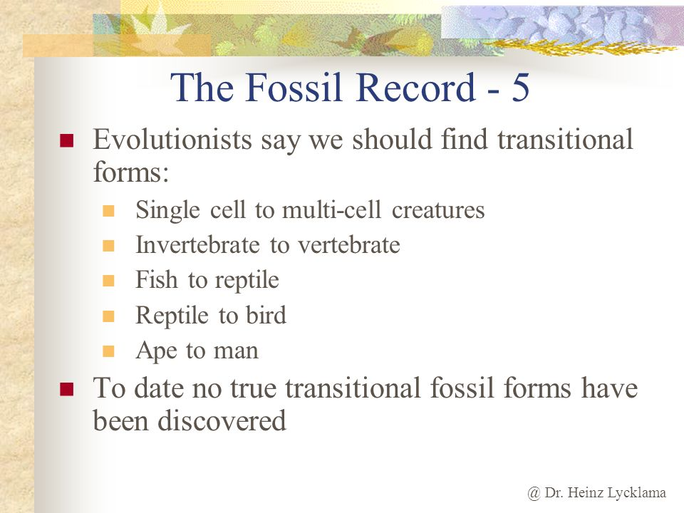 @ Dr. Heinz Lycklama The Fossil Record - 5 Evolutionists say we should find transitional forms: Single cell to multi-cell creatures Invertebrate to ve