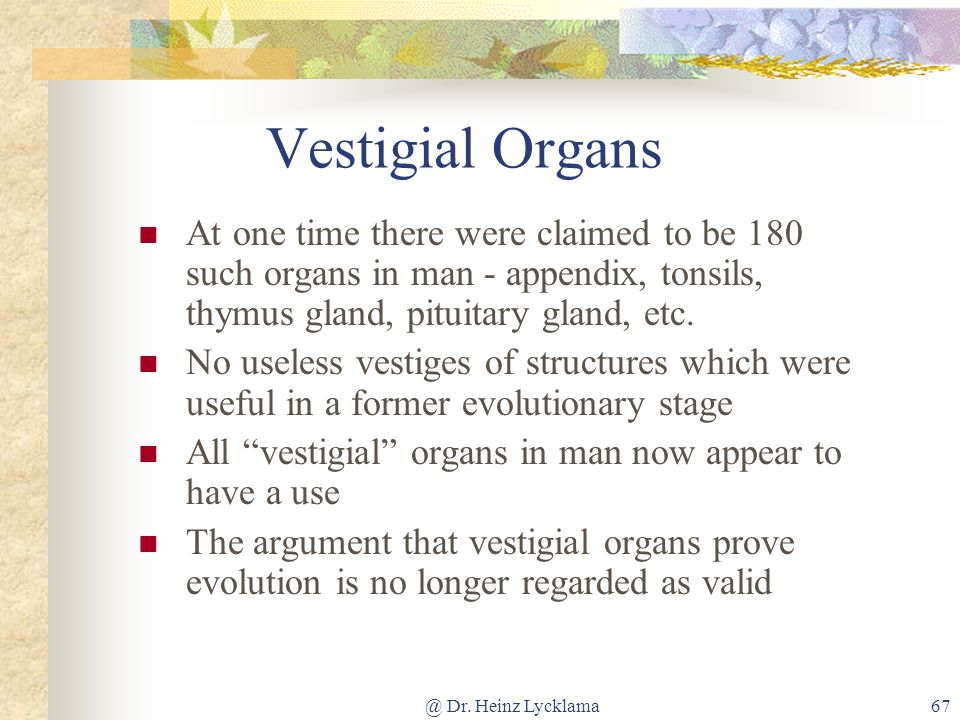 @ Dr. Heinz Lycklama67 Vestigial Organs At one time there were claimed to be 180 such organs in man - appendix, tonsils, thymus gland, pituitary gland