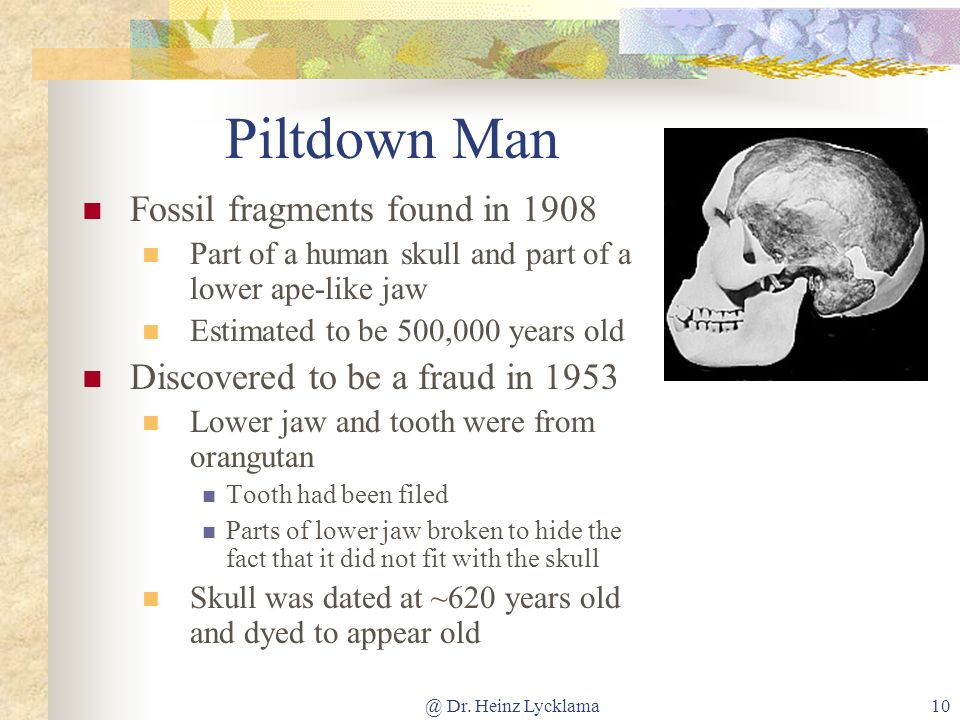 @ Dr. Heinz Lycklama10 Piltdown Man Fossil fragments found in 1908 Part of a human skull and part of a lower ape-like jaw Estimated to be 500,000 year