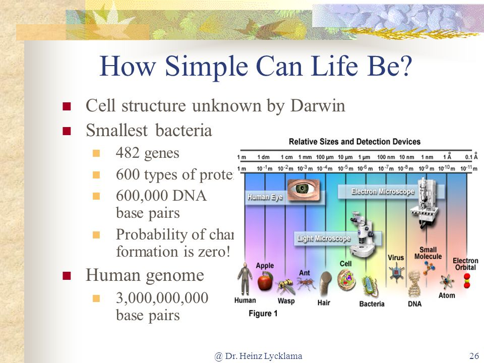 @ Dr. Heinz Lycklama26 How Simple Can Life Be? Cell structure unknown by Darwin Smallest bacteria 482 genes 600 types of proteins 600,000 DNA base pai