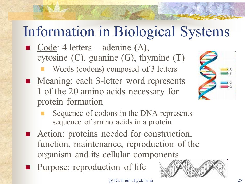 @ Dr. Heinz Lycklama28 Information in Biological Systems Code: 4 letters – adenine (A), cytosine (C), guanine (G), thymine (T) Words (codons) composed