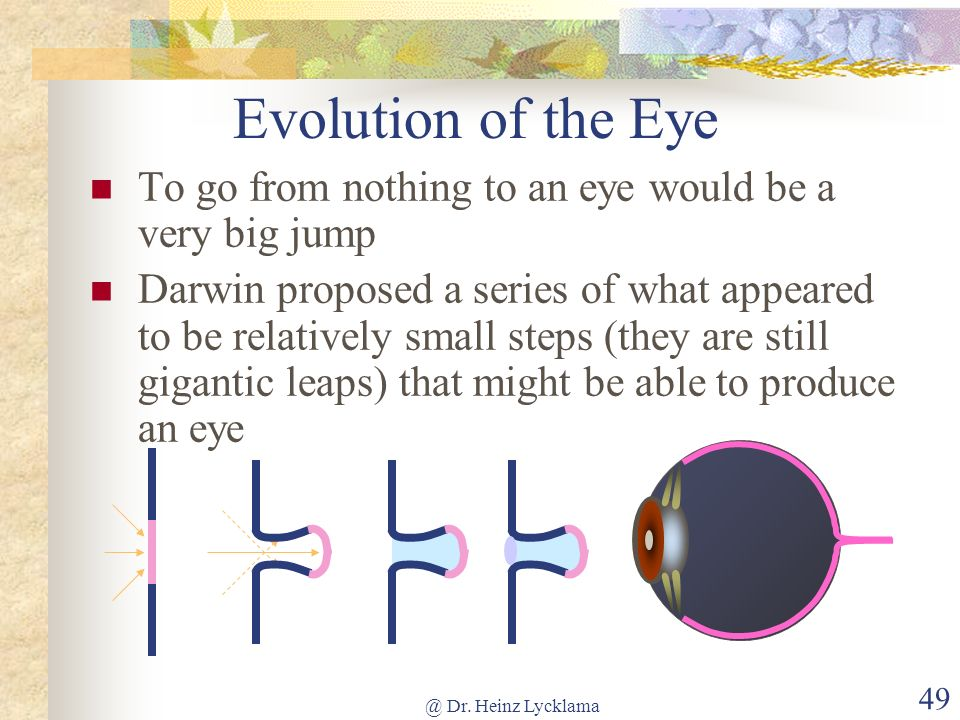 @ Dr. Heinz Lycklama 49 Evolution of the Eye To go from nothing to an eye would be a very big jump Darwin proposed a series of what appeared to be rel