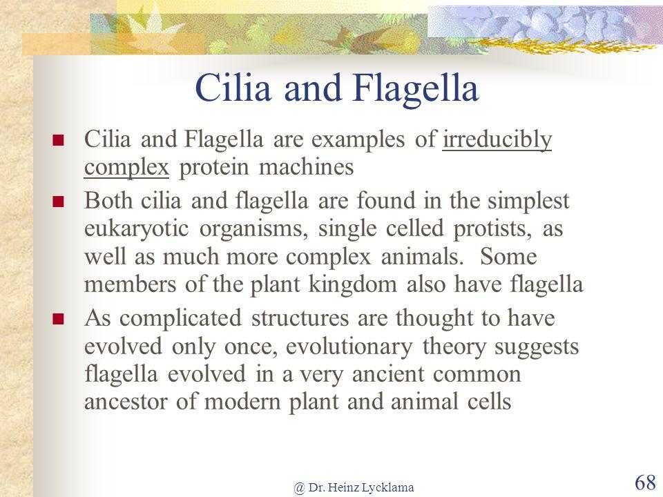 @ Dr. Heinz Lycklama 68 Cilia and Flagella Cilia and Flagella are examples of irreducibly complex protein machines Both cilia and flagella are found i