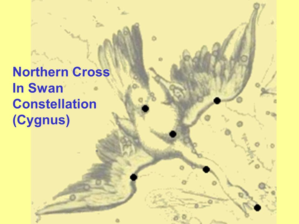 Northern Cross In Swan Constellation (Cygnus)