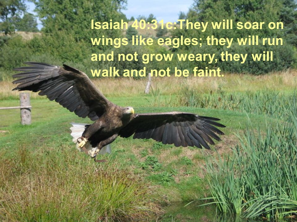 Isaiah 40:31c:They will soar on wings like eagles; they will run and not grow weary, they will walk and not be faint.