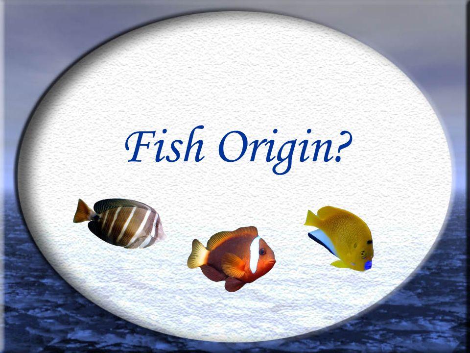 Fish Origin?