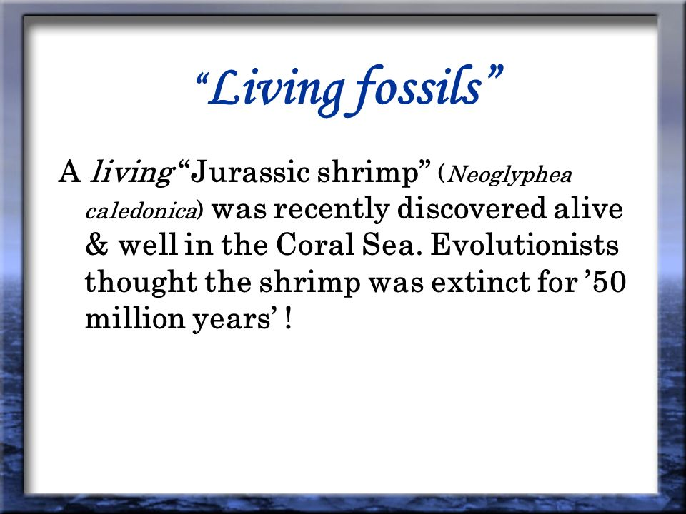 Living fossils A living Jurassic shrimp (Neoglyphea caledonica) was recently discovered alive & well in the Coral Sea.