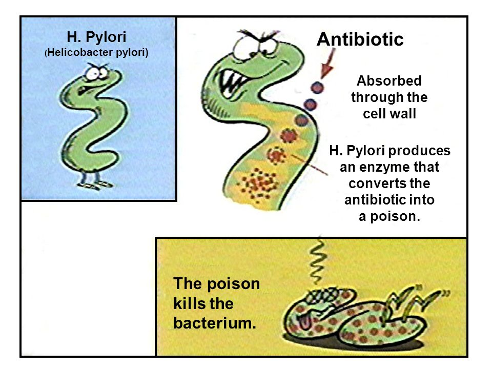 H. Pylori ( Helicobacter pylori) Antibiotic Absorbed through the cell wall H. Pylori produces an enzyme that converts the antibiotic into a poison. Th