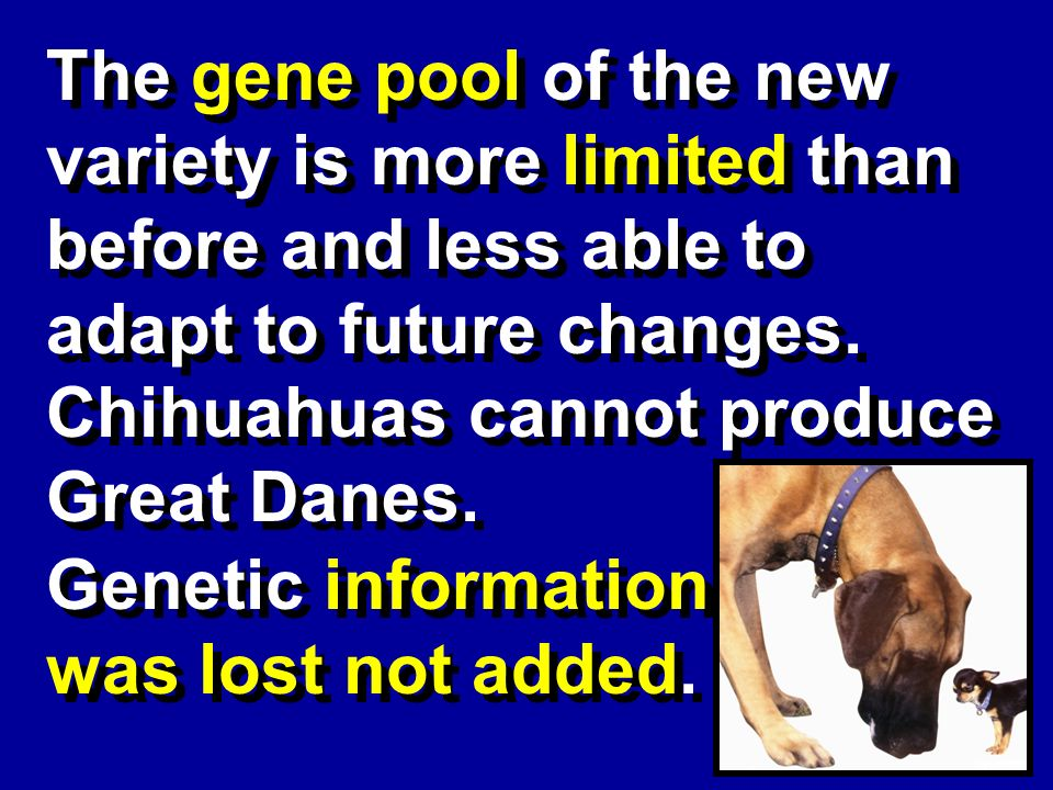 The gene pool of the new variety is more limited than before and less able to adapt to future changes.