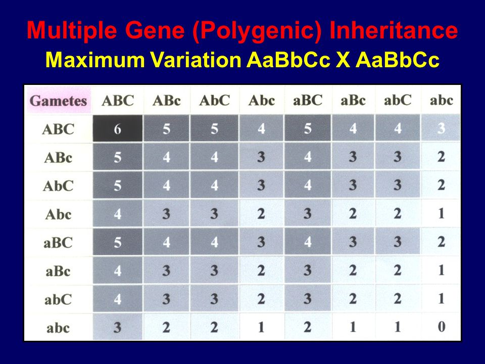 Multiple Gene (Polygenic) Inheritance Maximum Variation AaBbCc X AaBbCc
