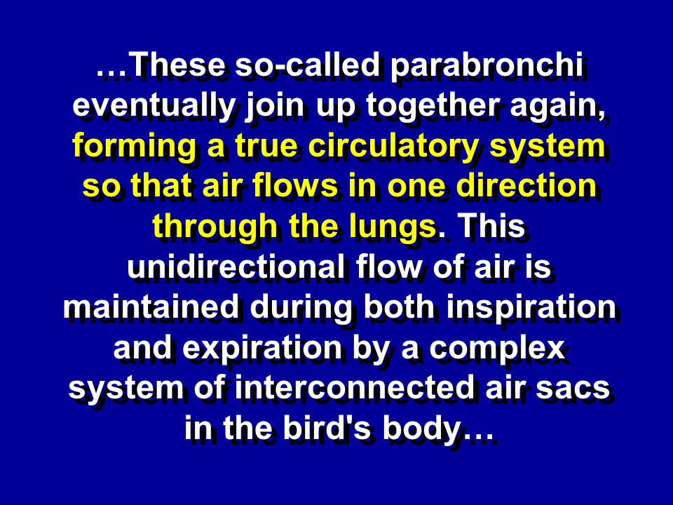 …These so-called parabronchi eventually join up together again, forming a true circulatory system so that air flows in one direction through the lungs