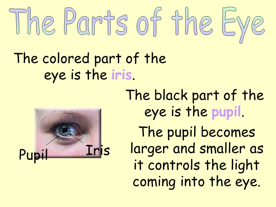 The eye is one of your sense organs. The eye is made of the iris and the pupil. The eye gathers pictures and sends them to the brain.