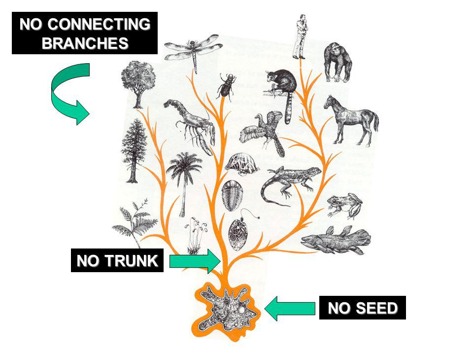 NO SEED NO TRUNK NO CONNECTING BRANCHES