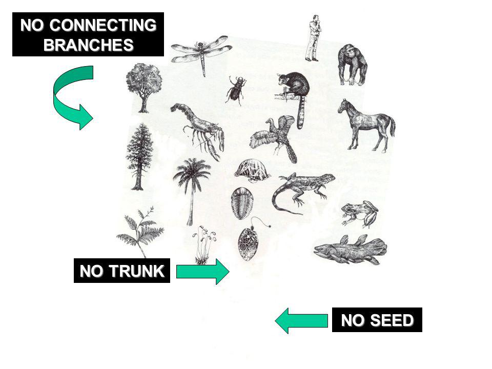 NO CONNECTING BRANCHES NO TRUNK NO SEED