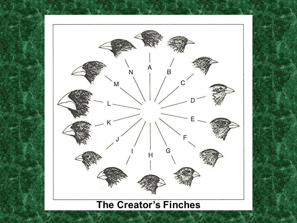 The Creators Finches
