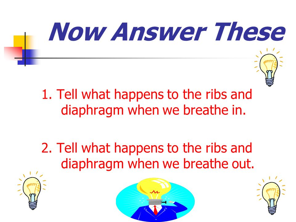 Now Answer These 1. Tell what happens to the ribs and diaphragm when we breathe in. 2. Tell what happens to the ribs and diaphragm when we breathe out