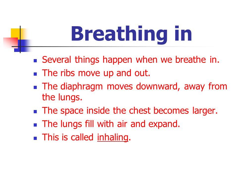 Breathing in Several things happen when we breathe in.