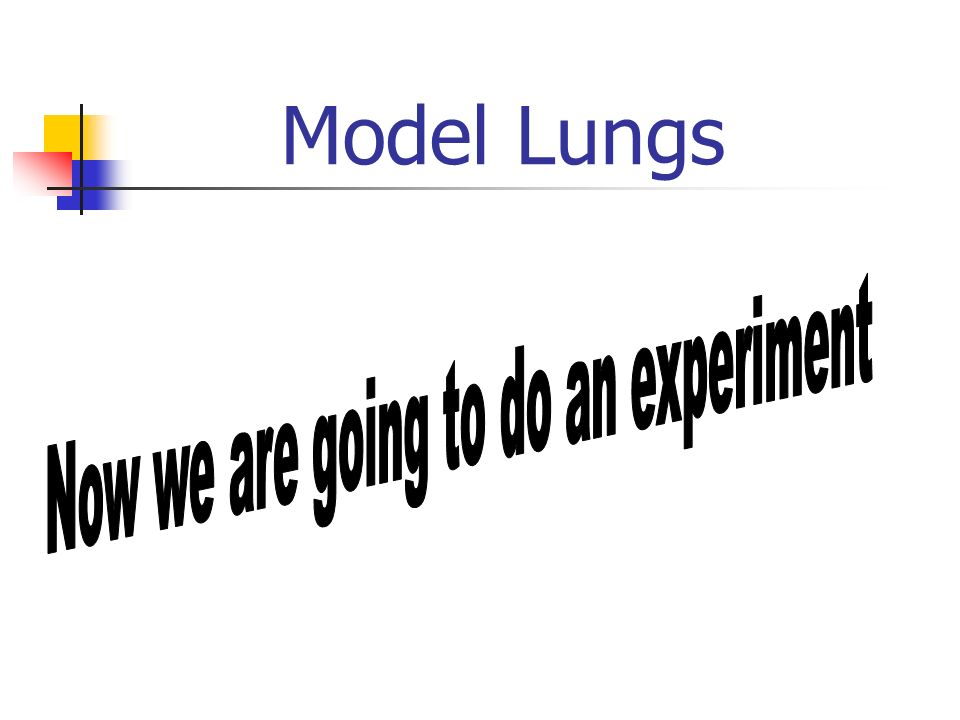 Model Lungs