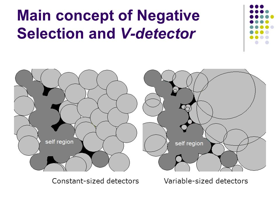 Main concept of Negative Selection and V-detector Constant-sized detectorsVariable-sized detectors