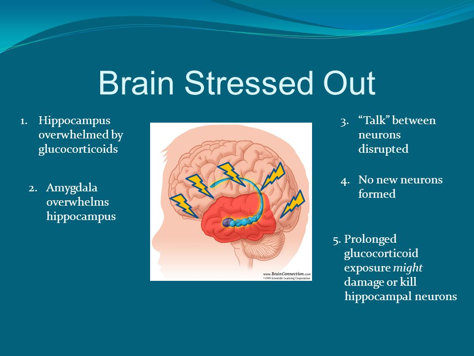 Brain Stressed Out 1.Hippocampus overwhelmed by glucocorticoids 2.Amygdala overwhelms hippocampus 3.Talk between neurons disrupted 4.No new neurons fo