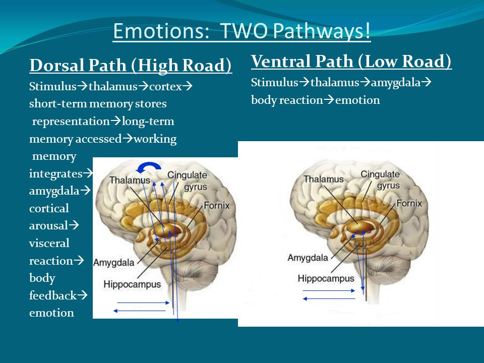 Emotions: TWO Pathways! Ventral Path (Low Road) Stimulus thalamus amygdala body reaction emotion Dorsal Path (High Road) Stimulus thalamus cortex shor