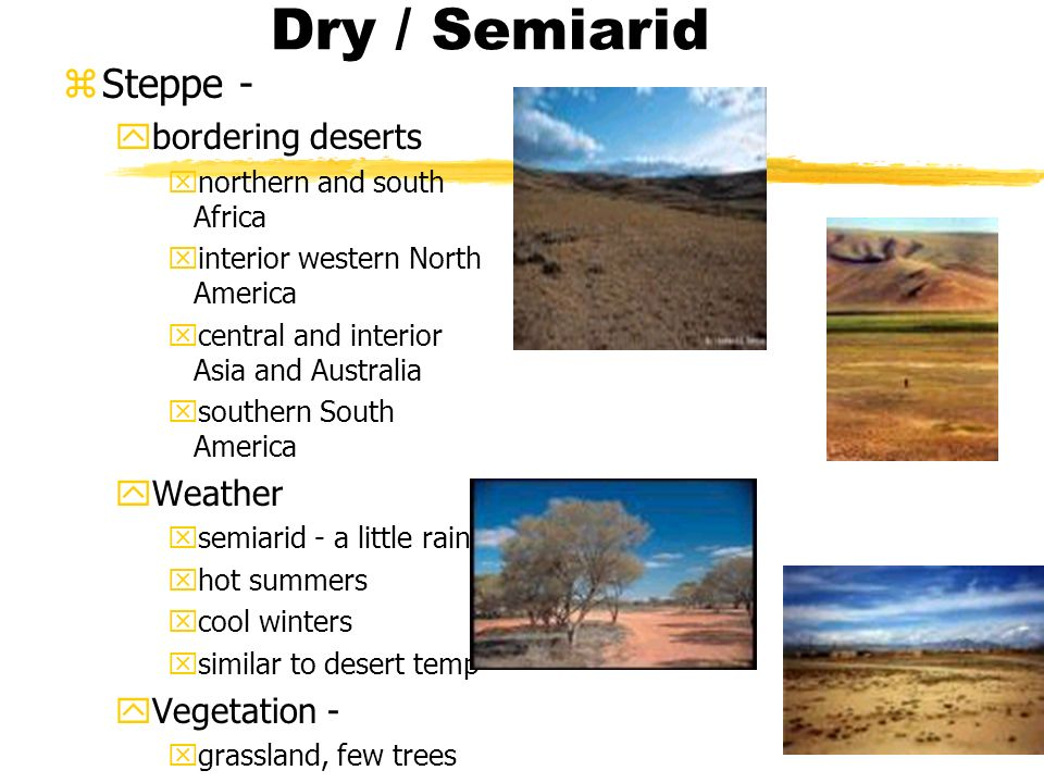 Dry / Semiarid zSteppe - ybordering deserts xnorthern and south Africa xinterior western North America xcentral and interior Asia and Australia xsouthern South America yWeather xsemiarid - a little rain xhot summers xcool winters xsimilar to desert temp yVegetation - xgrassland, few trees